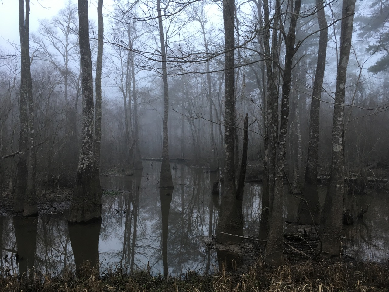 misty swamp photo