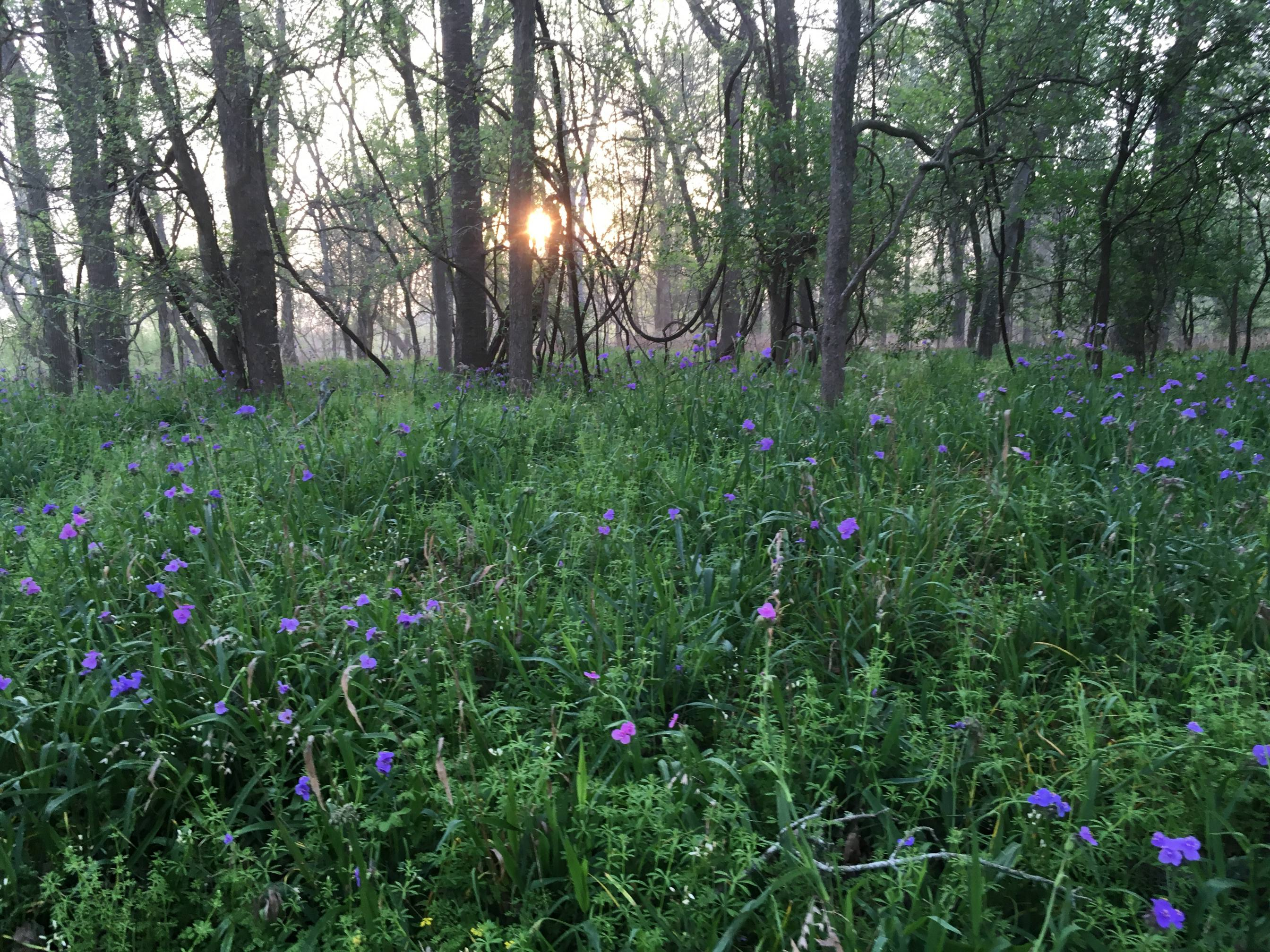 wildflowers at sunrise