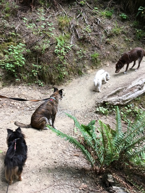 four dogs on a trail
