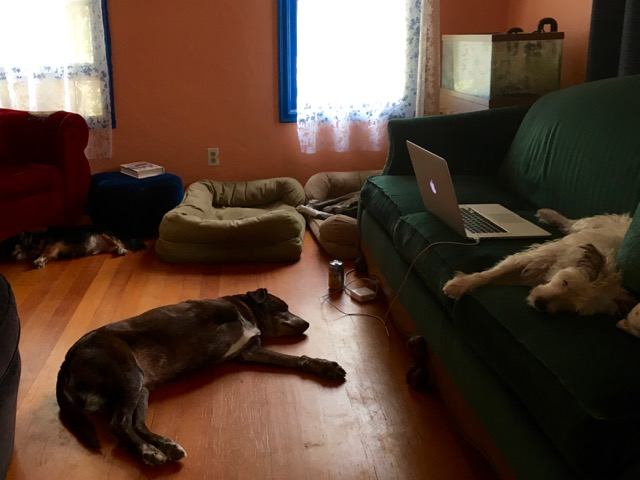 four dogs, all sleeping