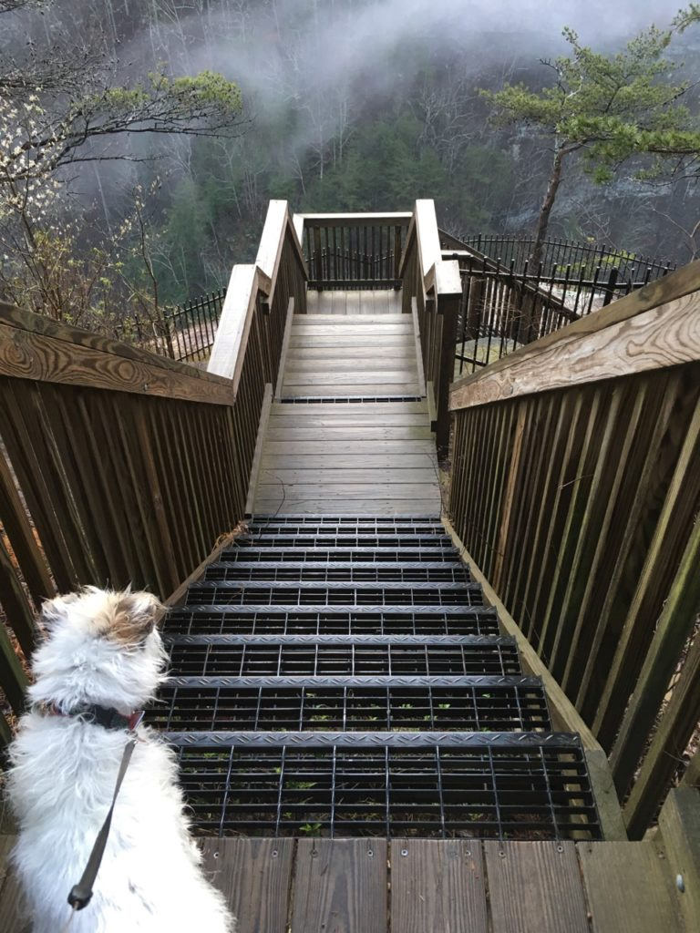 Stairs at Cloud Canyon Park in Georgia
